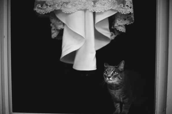 kitty looks at wedding dress