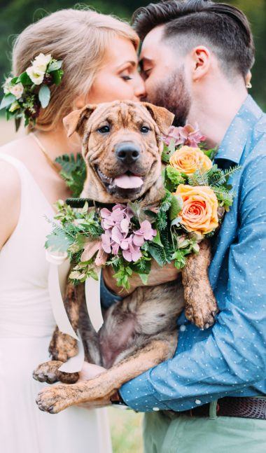 dog wearing flowers on wedding day