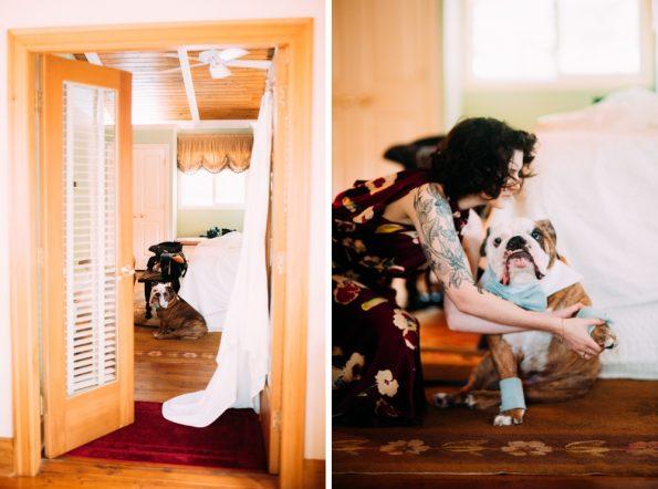 bulldog getting ready for wedding