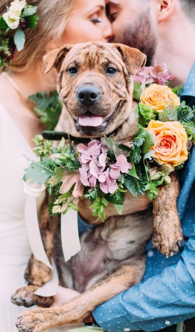 dog wearing wedding flowers